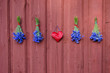 four blue cornflowers bunch and red heart on house wall