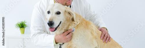 hund beim tierarzt - 53859910