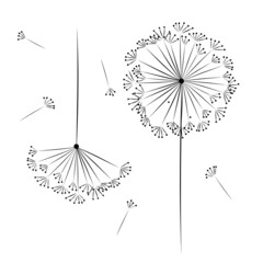 Dandelion flower for your design