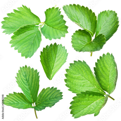 Strawberries leaves.