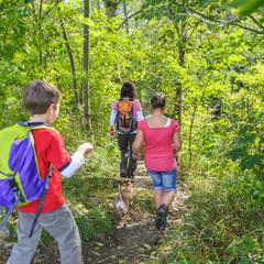 Wanderung im grünen Wald
