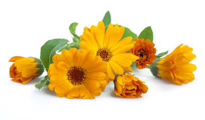 Marigold flowers, isolated on white.