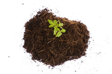 small sapling growing in a pile of dirt