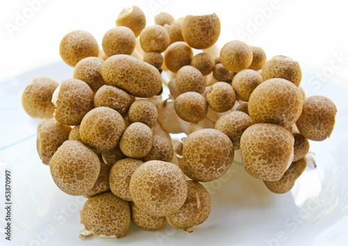 Brown beech mushrooms