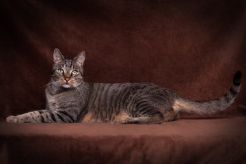 Katzenportrait III