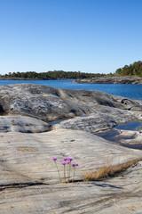 Rocky landscape in Stockholm archipelago.