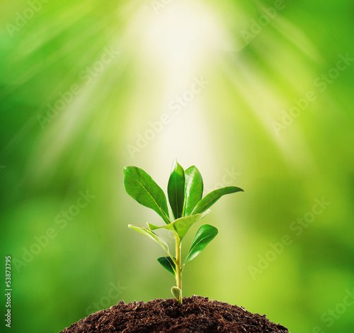 Small plant on pile of soil, part of it reflected