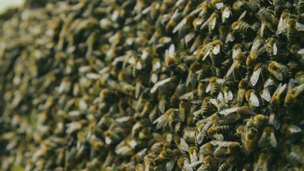 Busy Bee Workers on Honeycomb HD