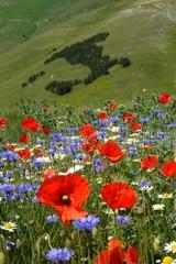 Italia fiorita