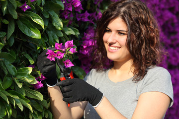 Gardener woman cutting a pink flower with secateurs