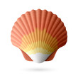 Scallop seashell - 53887953