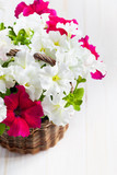White and Pink Petunia flowers in a wattled basket on wooden bac