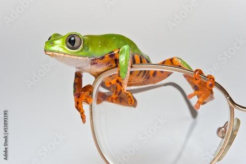 Foto op Canvas Kikker Frosch auf Brille