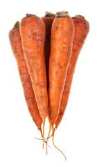 several fresh orange carrots
