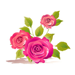 roses flowers vector
