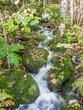 Small stream