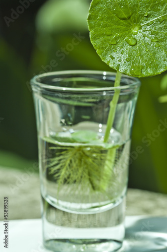 Leaves in a glass cup