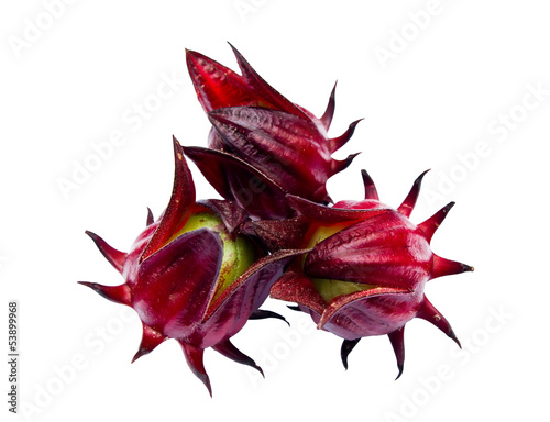 roselle isolated on white