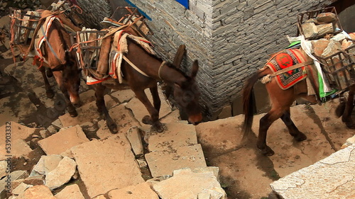 Transportation of freights on mules. Nepal, Himalayas.