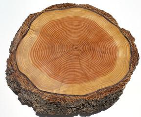Jahresringe, Holzstamm,