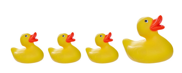 isolated on white yellow rubber duck and ducklings