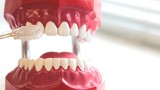 Teeth brush cleans toy jaw on table in dental surgery.