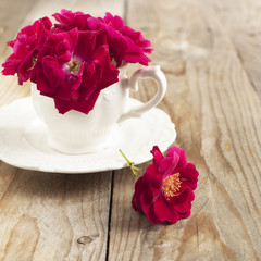 Dog rose flowers in cup