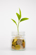 plant and coins in glass jar