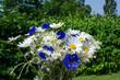 Closeup of summer flowers