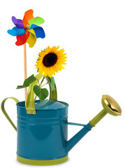 Watering can with sunflower