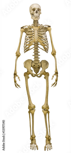 full-face human skeleton on white