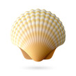 Scallop seashell - 53918985