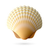 Scallop seashell