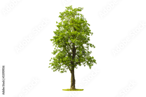 Fotobehang Bomen Tree isolated with white background
