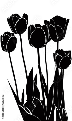 tulips flowers it is isolated