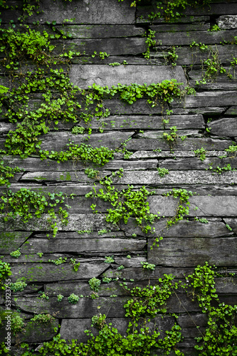 Old stone wall with leaves background