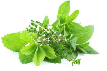 Fresh green herbs