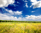 Summer field with blue sky and clouds