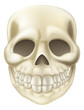 Cartoon Halloween Scull