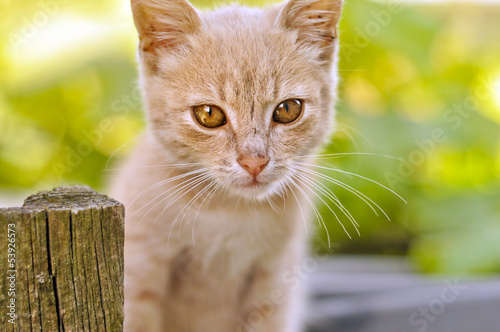 Cute red kitten outdoors