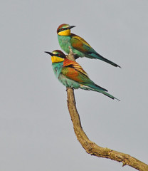 colorful birds couple