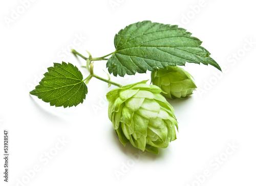 Papiers peints Vegetal hops