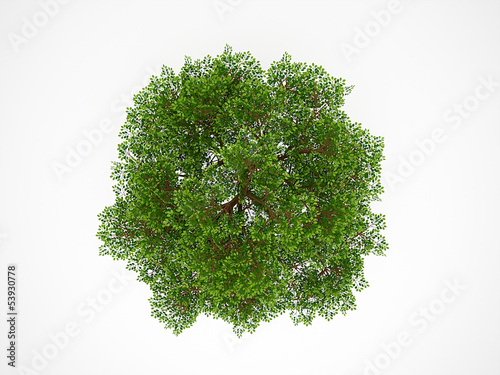Tree from above isolated