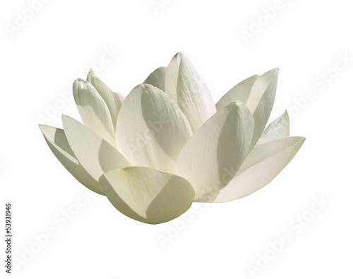 Aluminium Lotusbloem Fleur lotus