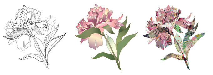 peony drawing, color and quilt set