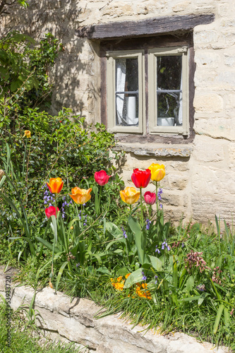 Tulips in a Cottage Garden