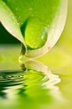 Goutte d'eau sur une feuille, reflets