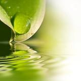 Fototapety Gouttes d'eau sur une feuille, reflets