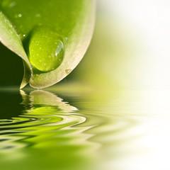 Gouttes d'eau sur une feuille, reflets