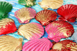 Colorful seashells  background